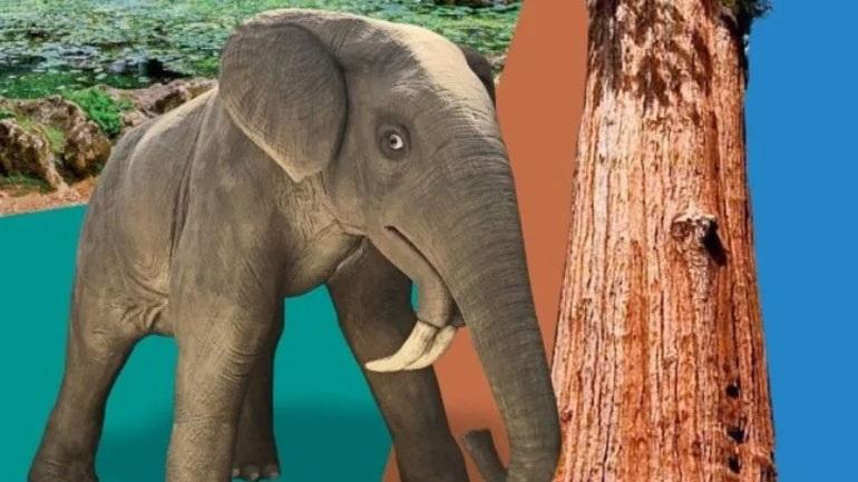 Δεινοθήρια και σεκόιες από το απολιθωμένο δάσος της Λέσβου στο Ίδρυμα Ευγενίδου